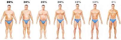 bodyfat pct grafic
