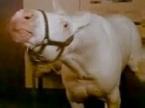 animal-house-horse